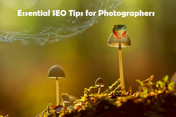 Essential SEO Tips for Photographers